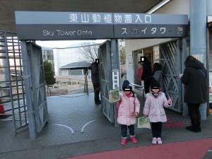 東山動物園コアラ1