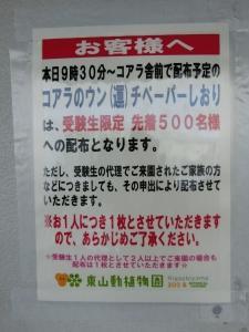 東山動物園コアラ4-1