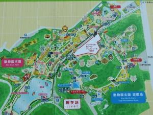 東山動物園コアラ6-1