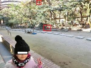 東山動物園コアラ9
