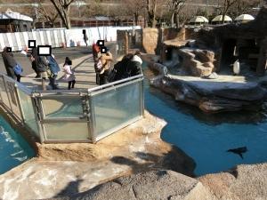 東山動物園コアラ18