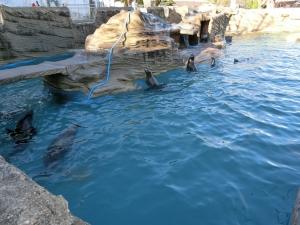 東山動物園コアラ17