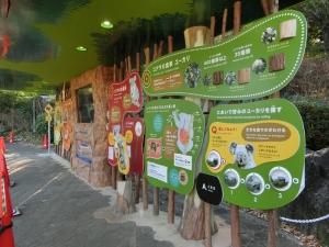 東山動物園コアラ18-1