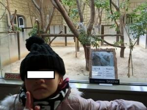 東山動物園コアラ25