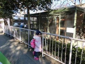 東山動物園コアラ18-0-1
