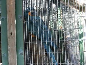 東山動物園コアラ18-0-2
