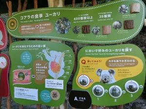 東山動物園コアラ18-3