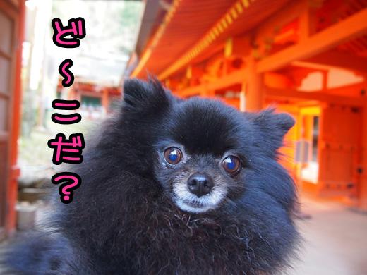 gyaranomibaraihakomarunone.jpg