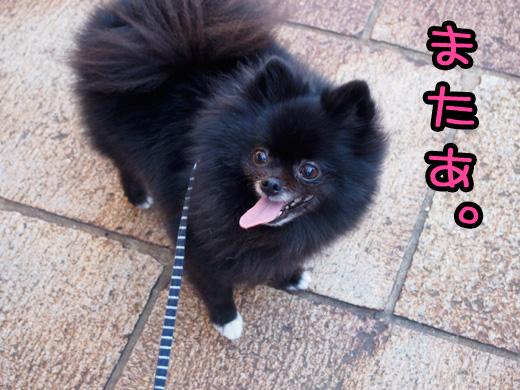 kocchinoimagegawarukunaruyounakoto.jpg