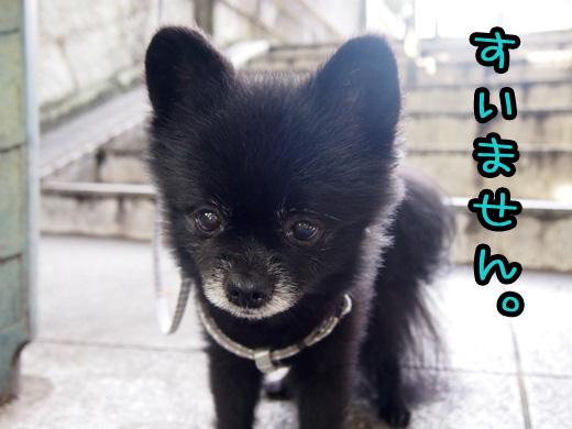 moukochitoratosinanode.jpg