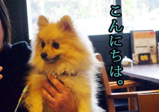 newtomochan.jpg