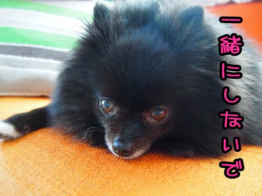 tchiichigachigaunoyo.jpg