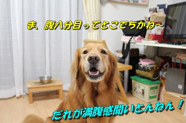 20151214222510a66.jpg