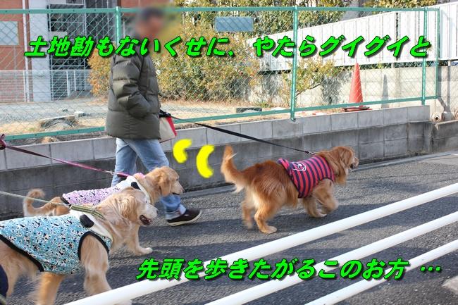 201603081400317d7.jpg