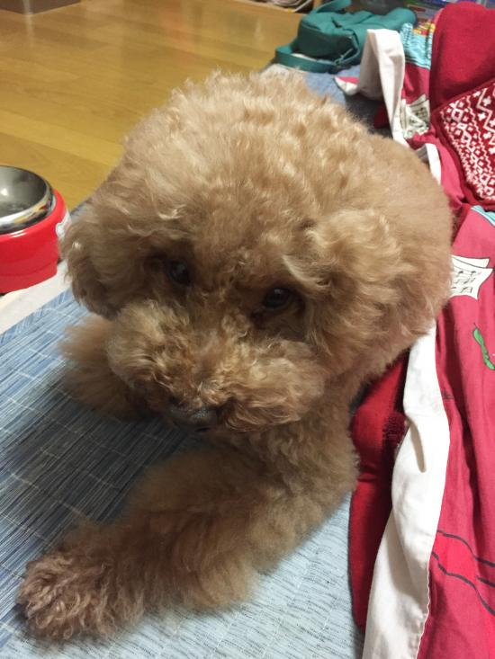 愛犬rossi(ロッシ)病気になる(´-ω-`)