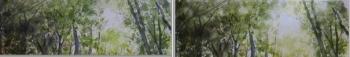 木洩れ日比較