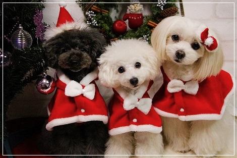 メリークリスマス★2015