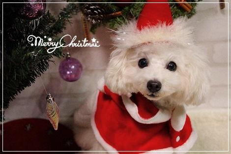 メリークリスマス今日は本番♪