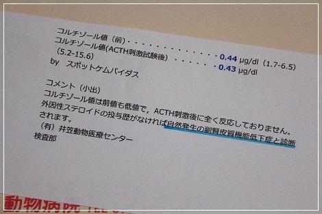ACTH検査結果・・・