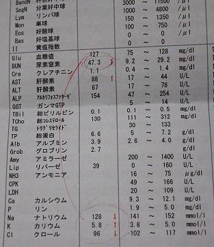 1月9日血液検査
