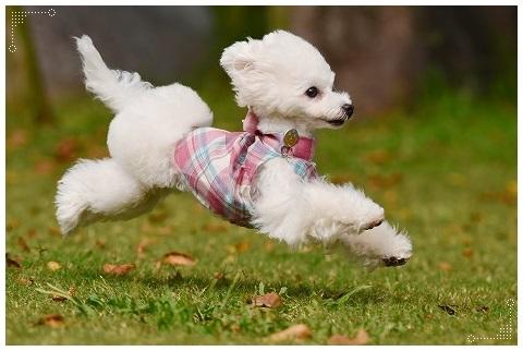 飛行犬になったよ、ぐーたん!