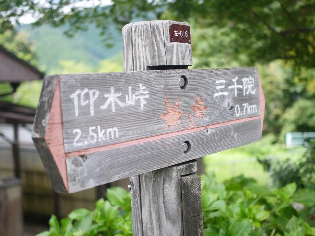 しっぽり巡る秋の京都大原三千院