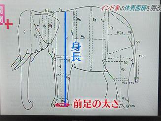 象の体の表面積を求める公式がある?