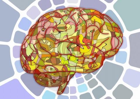 あなたは右脳人間? それとも左脳人間?