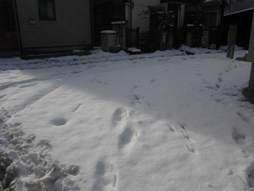 20160118・雪15