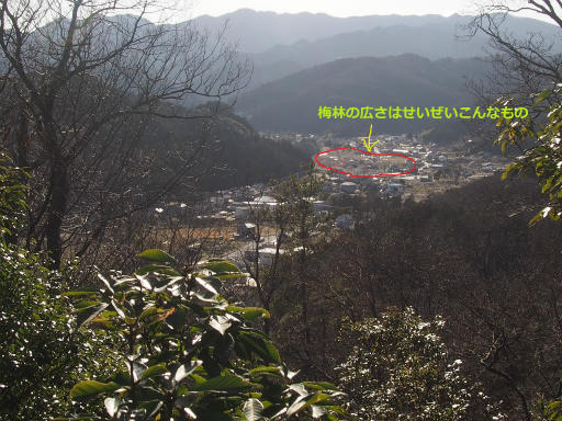 20160227・越生梅見4-32(補足)