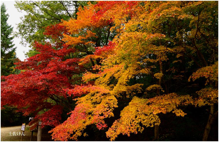 神戸森林植物園5