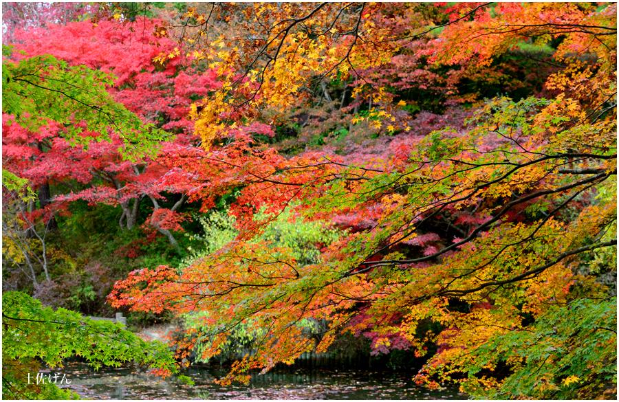 神戸森林植物園2