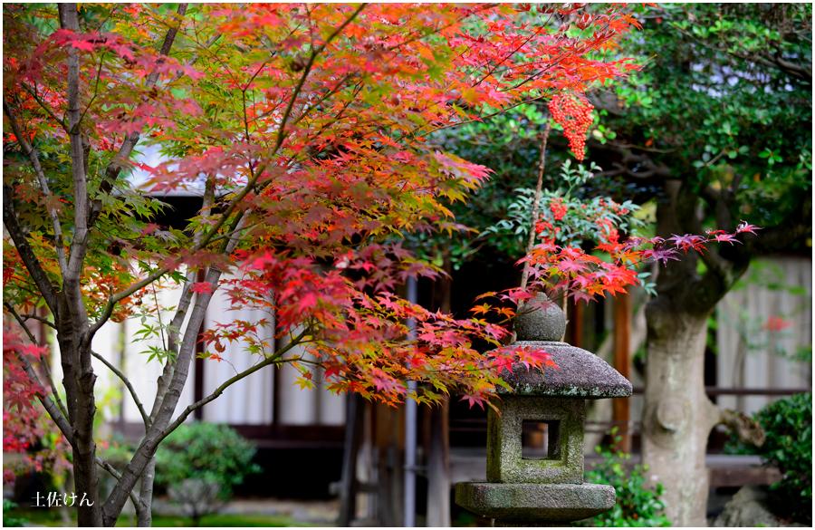 秋の京都3