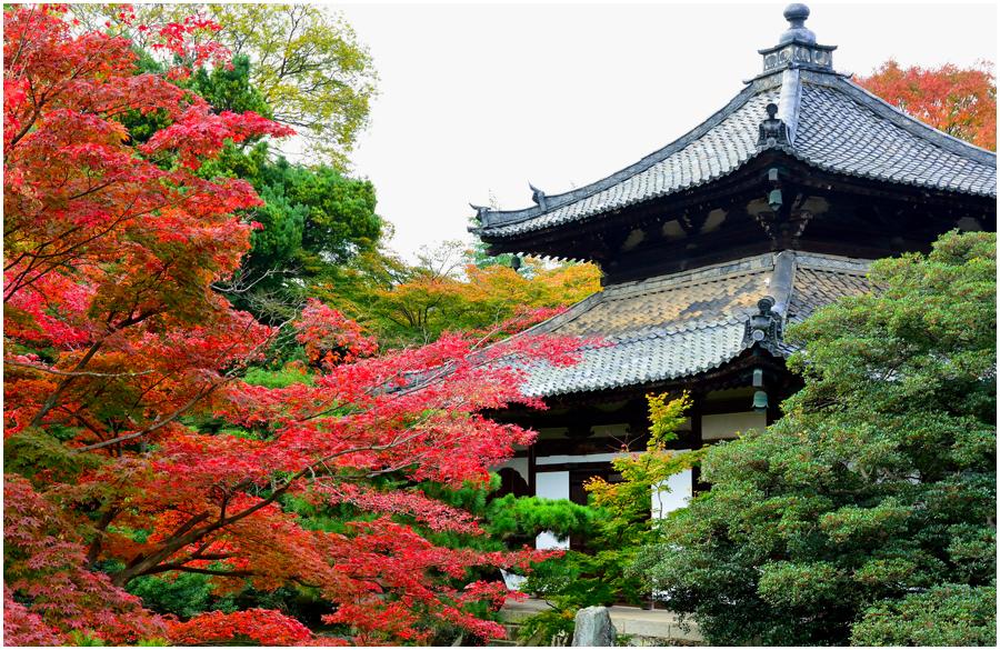 秋の京都・助手