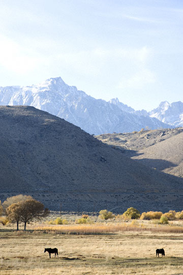 blog 395 Lone Pine, Ranch & Horses, CA_DSC0055-12.1.09.(3).jpg
