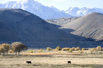 blog 395 Lone Pine, Ranch & Horses, CA_DSC0053-12.1.09.(3).jpg