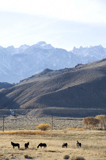 blog 395 Lone Pine, Ranch & Horses, CA_DSC0050-12.1.09.(3).jpg